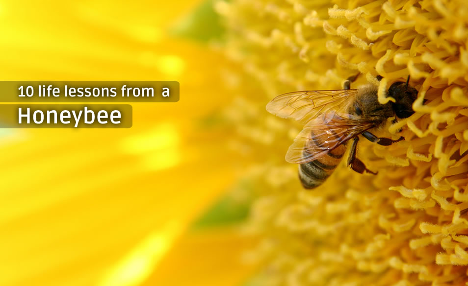 life lessons from a honeybee